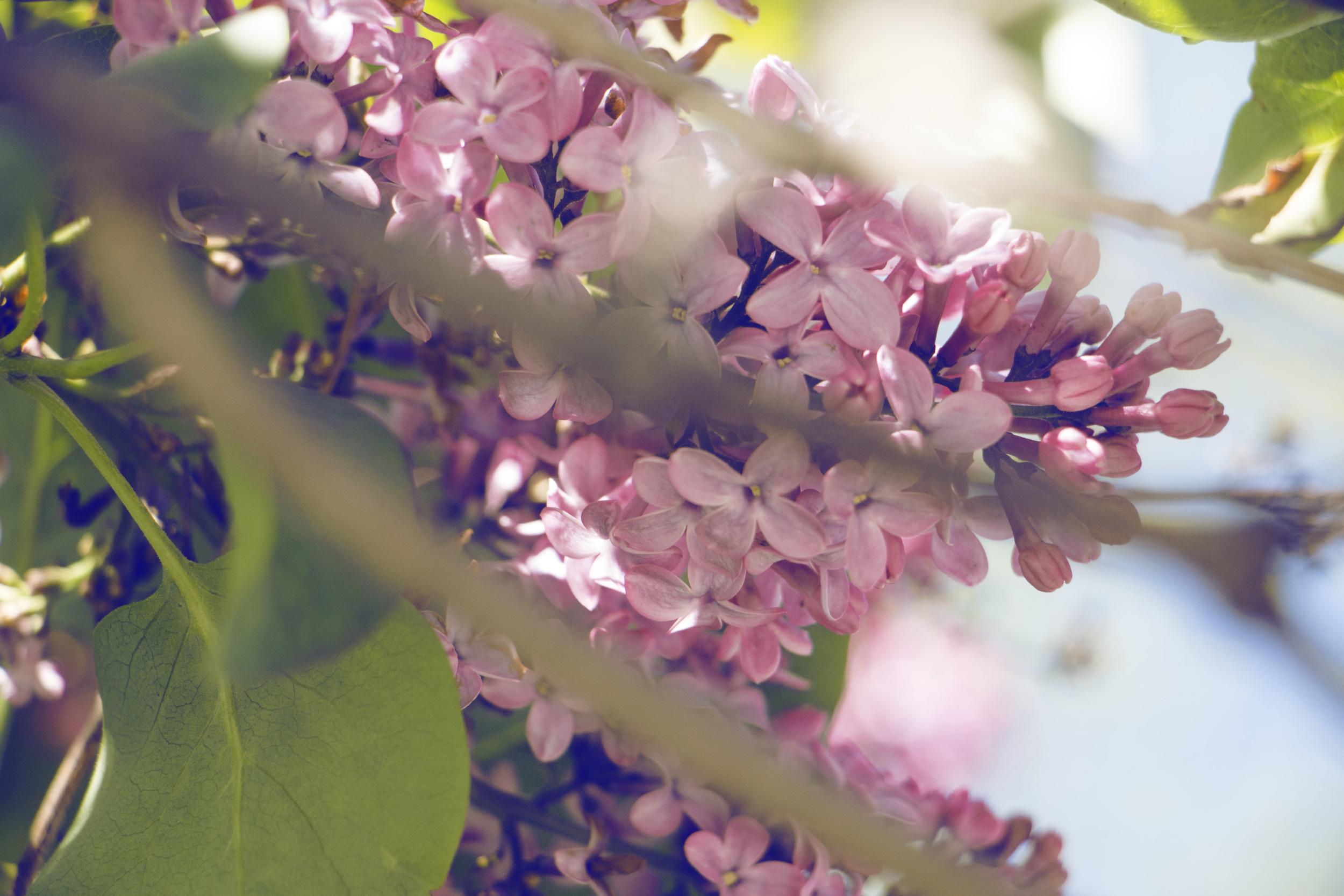 maliqi.flowers4.jpg