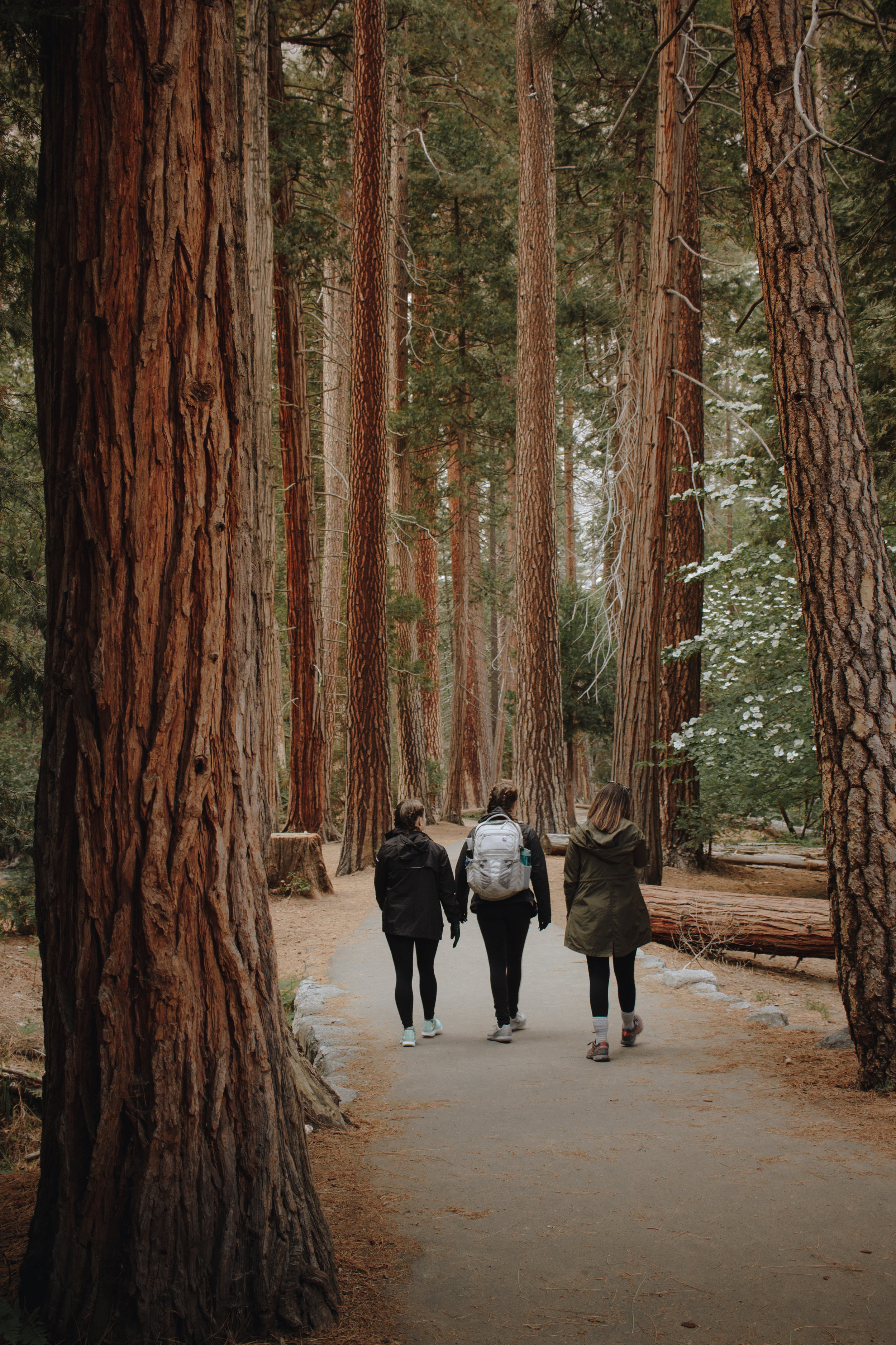 The walk to Lower Yosemite Falls