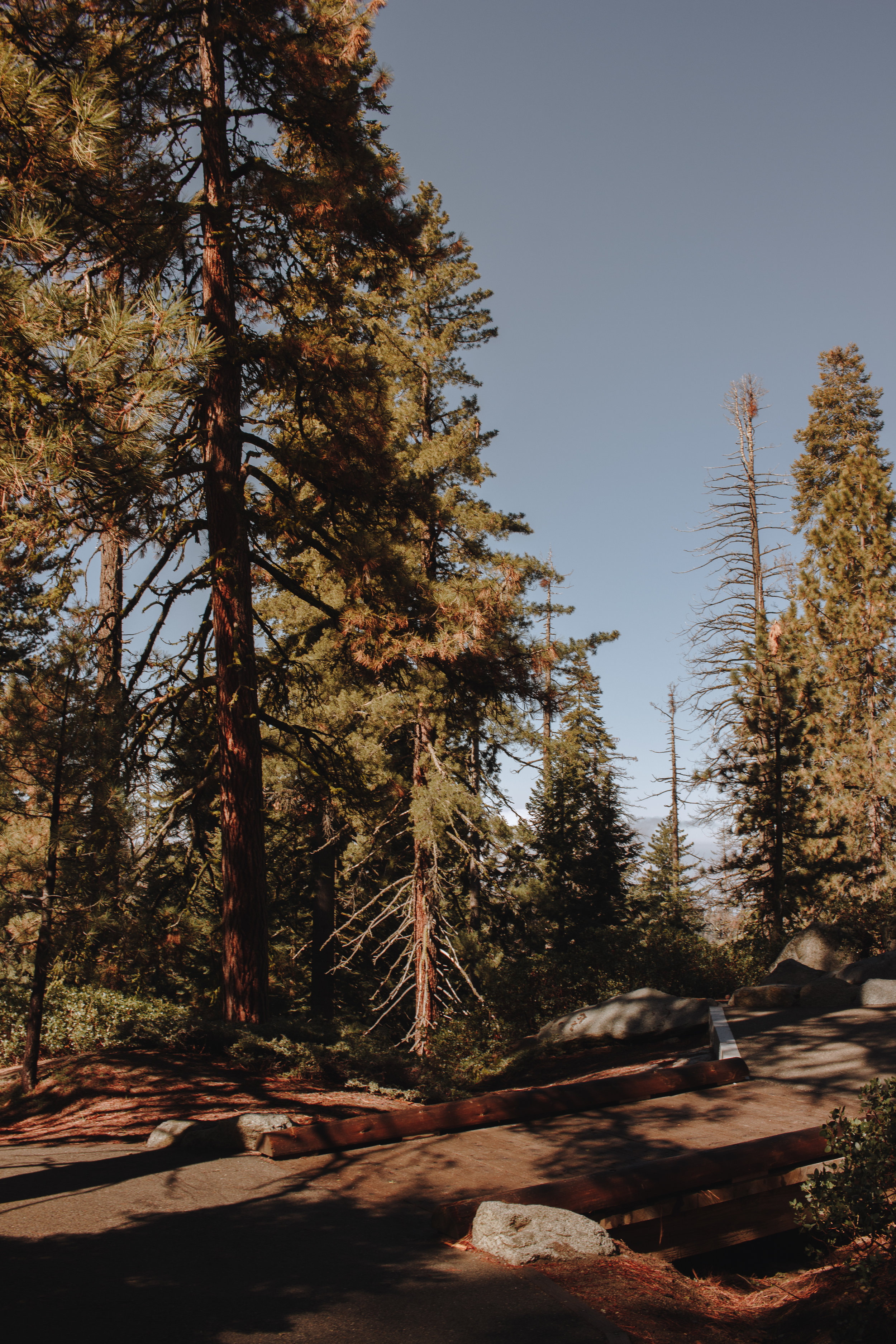 the hike to General Sherman