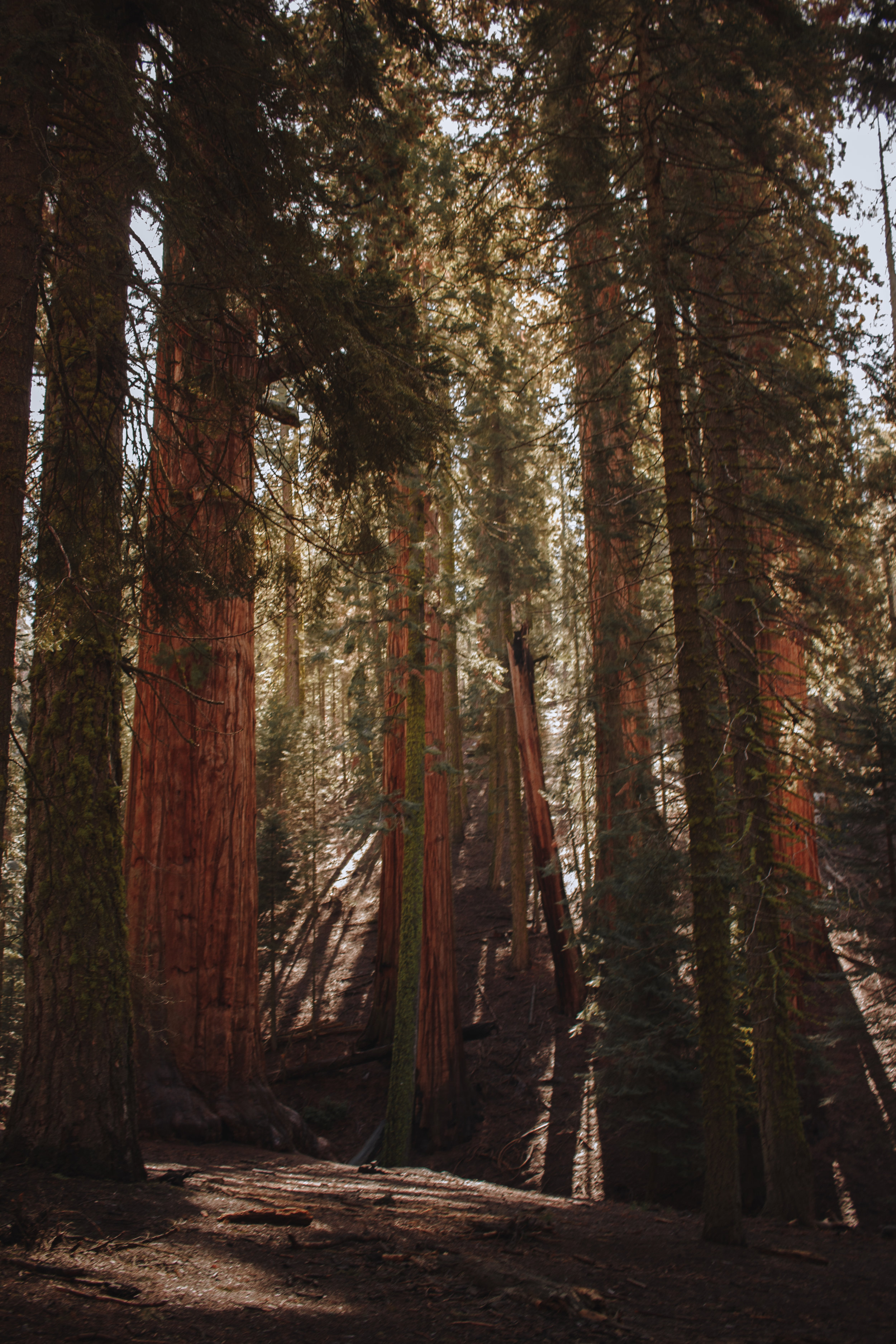 Redwood trees in the distance
