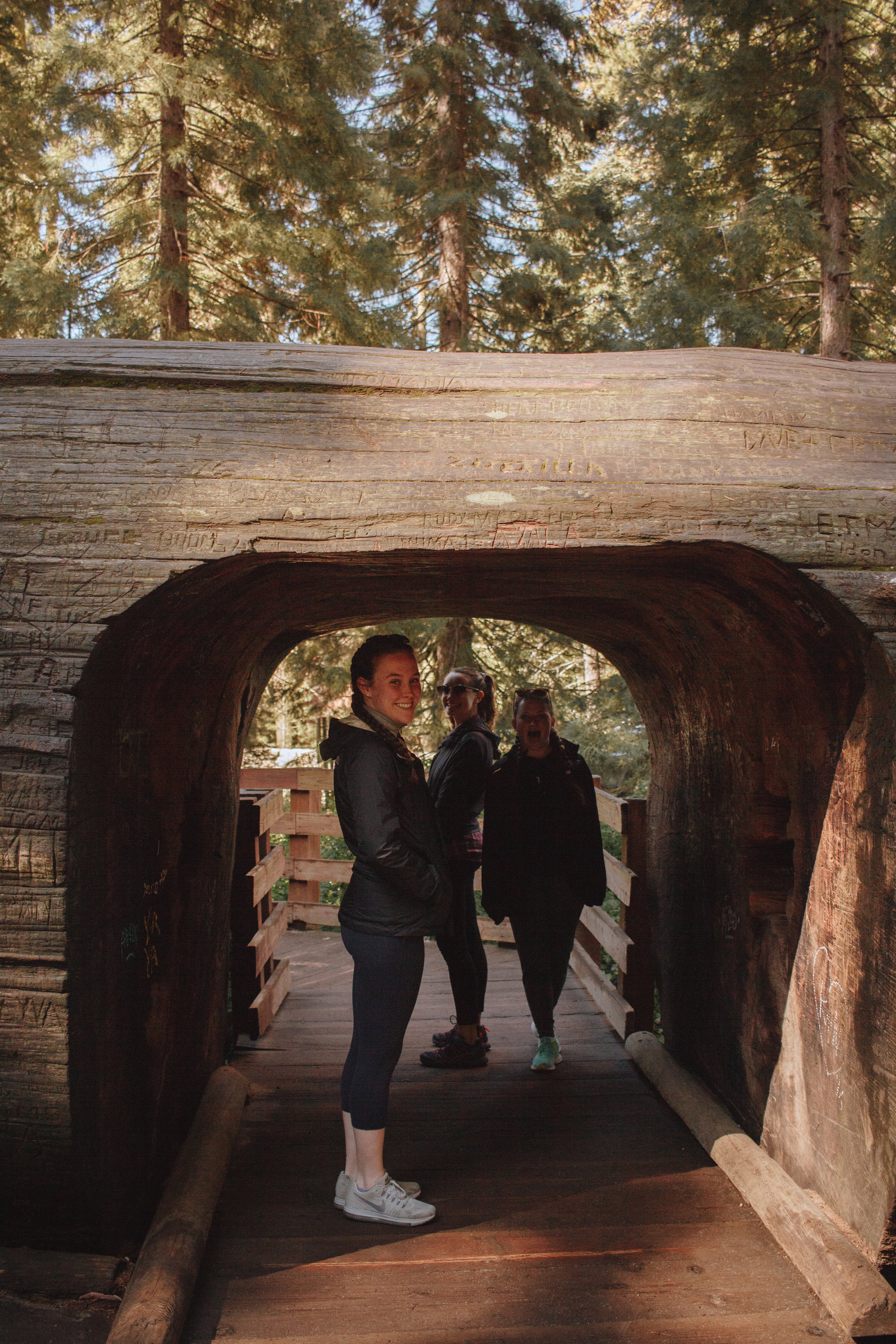 Fallen sequoias are turned into tunnels- neat, right?