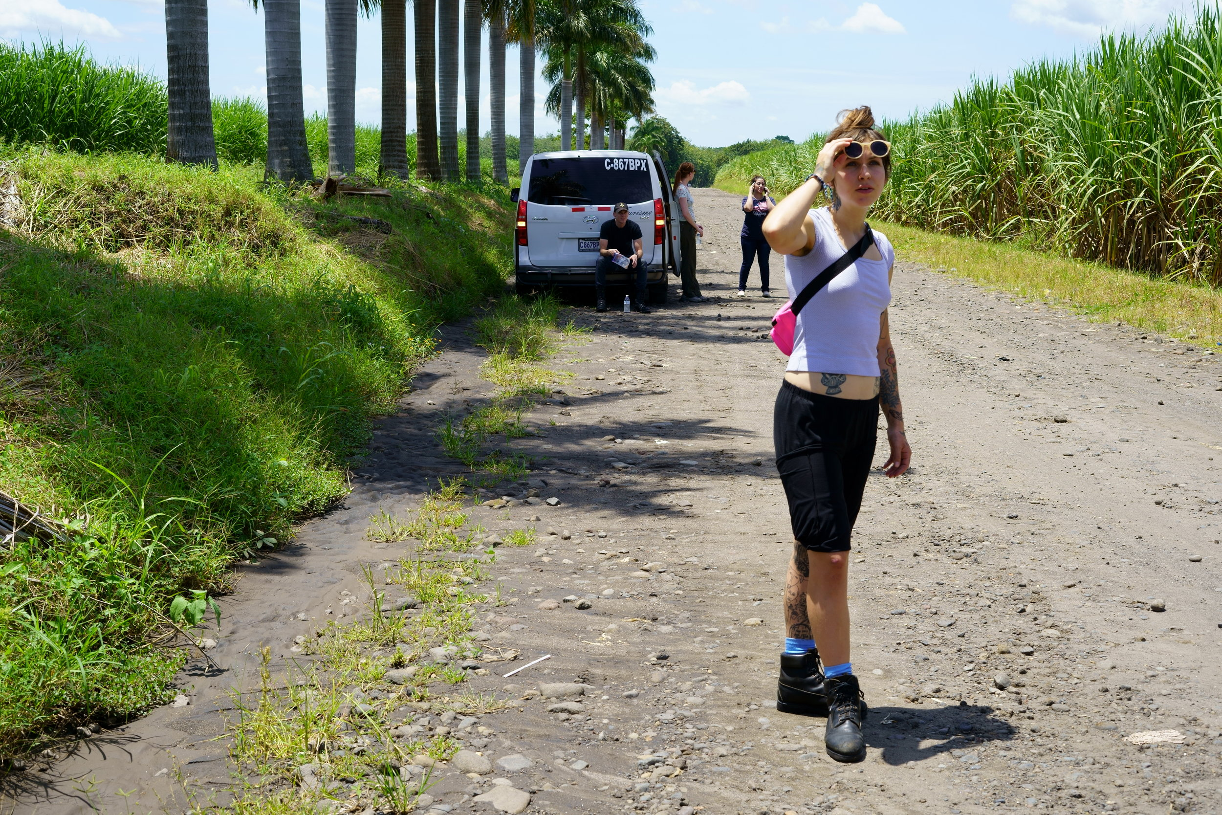 Sugar Cane Fields.JPG