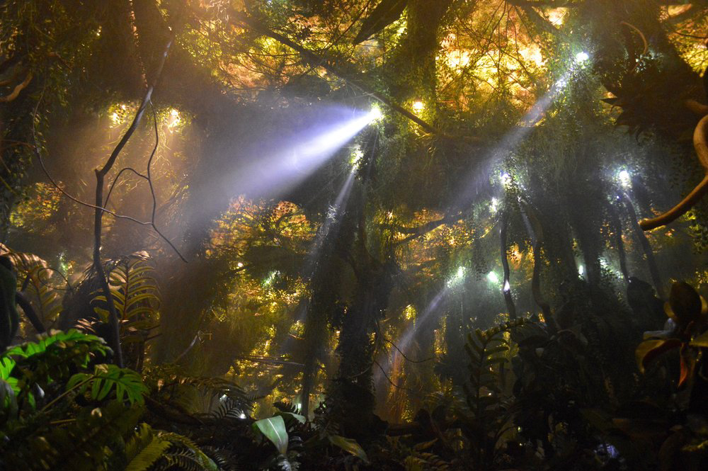 tarzan-infinity-jungle-interior-rays-1000x665.jpg