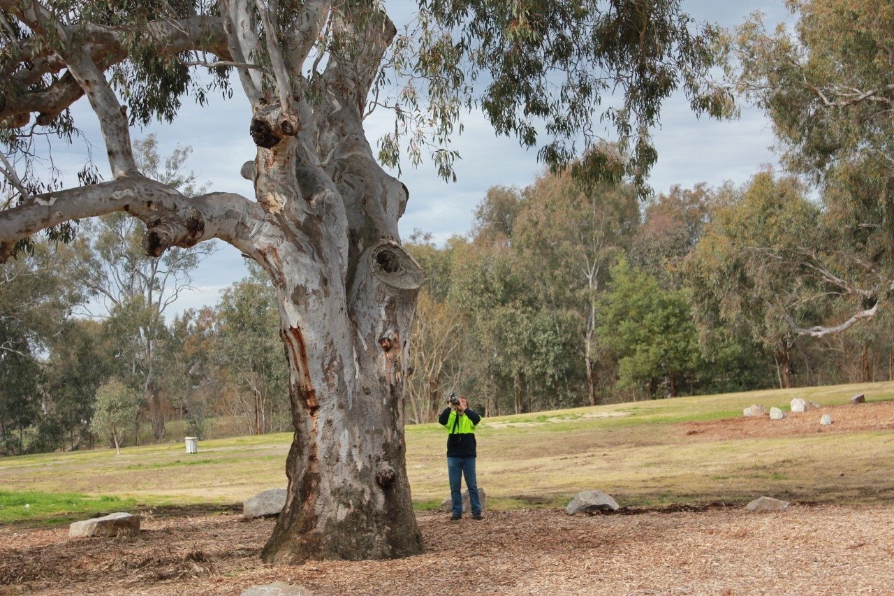 Only Dipolma qualified arborists (level 5) with professional indeminity insurance can assess trees and provide written tree assessment reports
