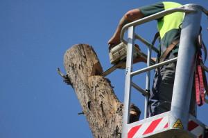 Installation of a Bird Box in a Habitat Tree