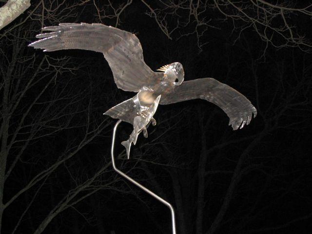 Bayman's Osprey