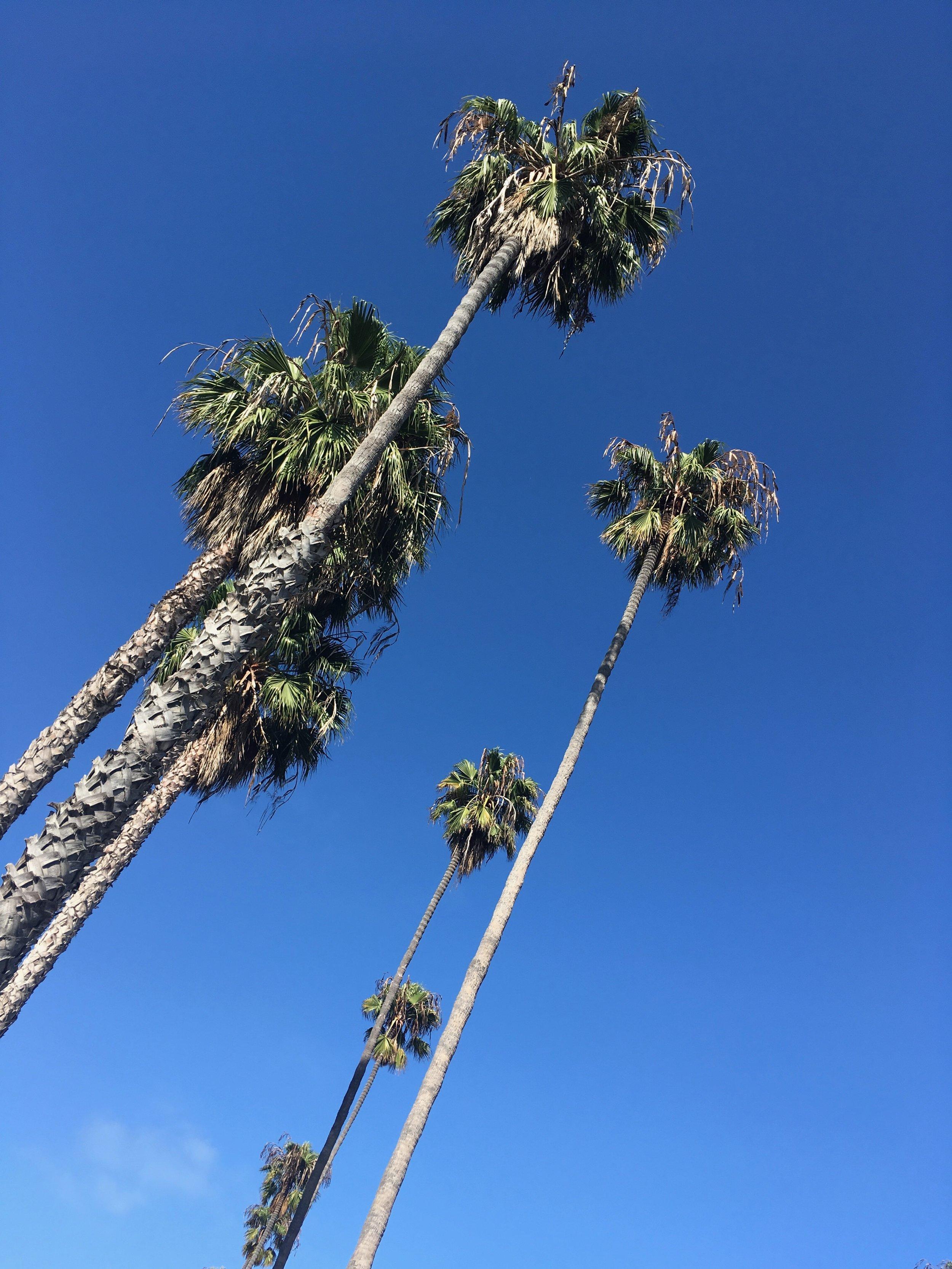Margaret_Alba_Los_Angeles-3.jpg