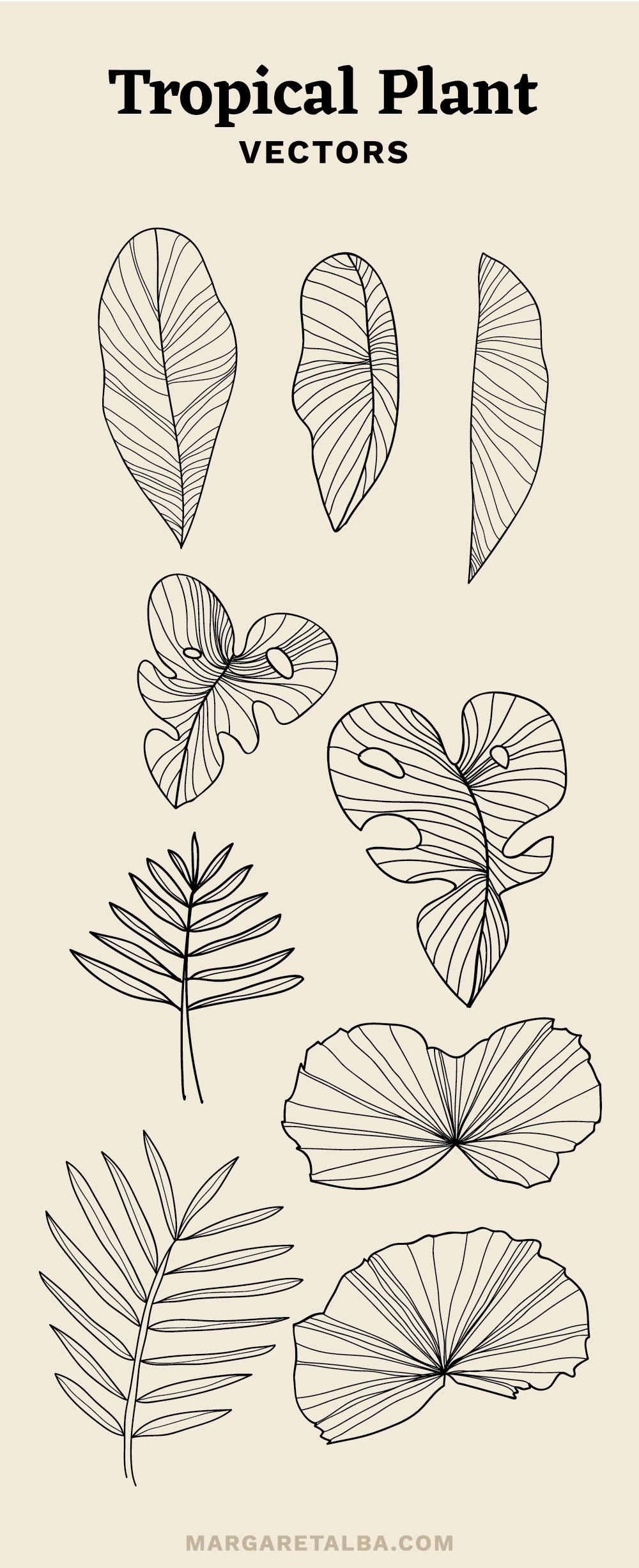 Margaret_Alba_Tropical_Plant_Vector.png