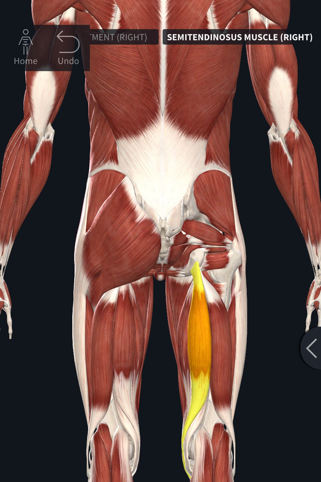How To Get Rid of Hamstring Pain WITHOUT Stretching