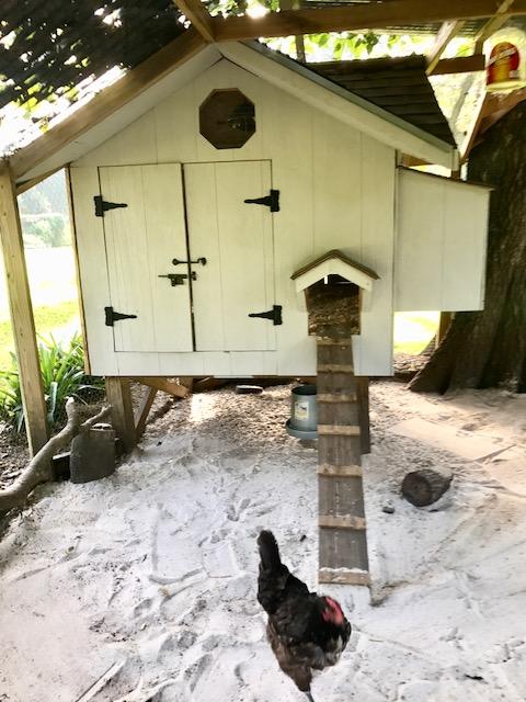 chicken coop painted.jpg
