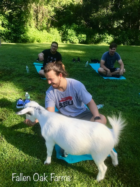 Seu goat yoga.jpg