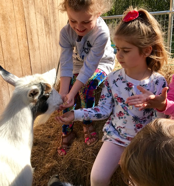 kids goat yoga feeding.jpg
