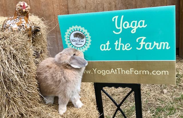 bunny yoga.jpg