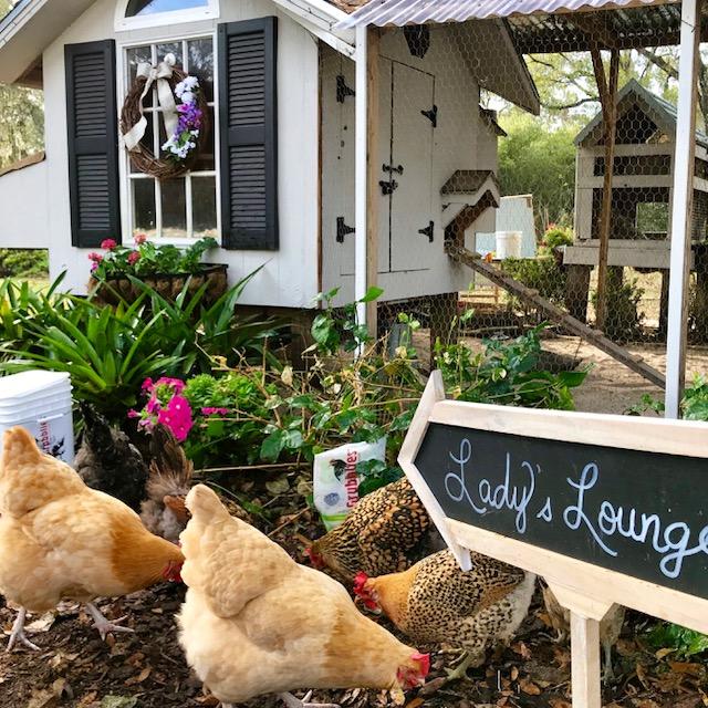 chicken coop lounge.JPG