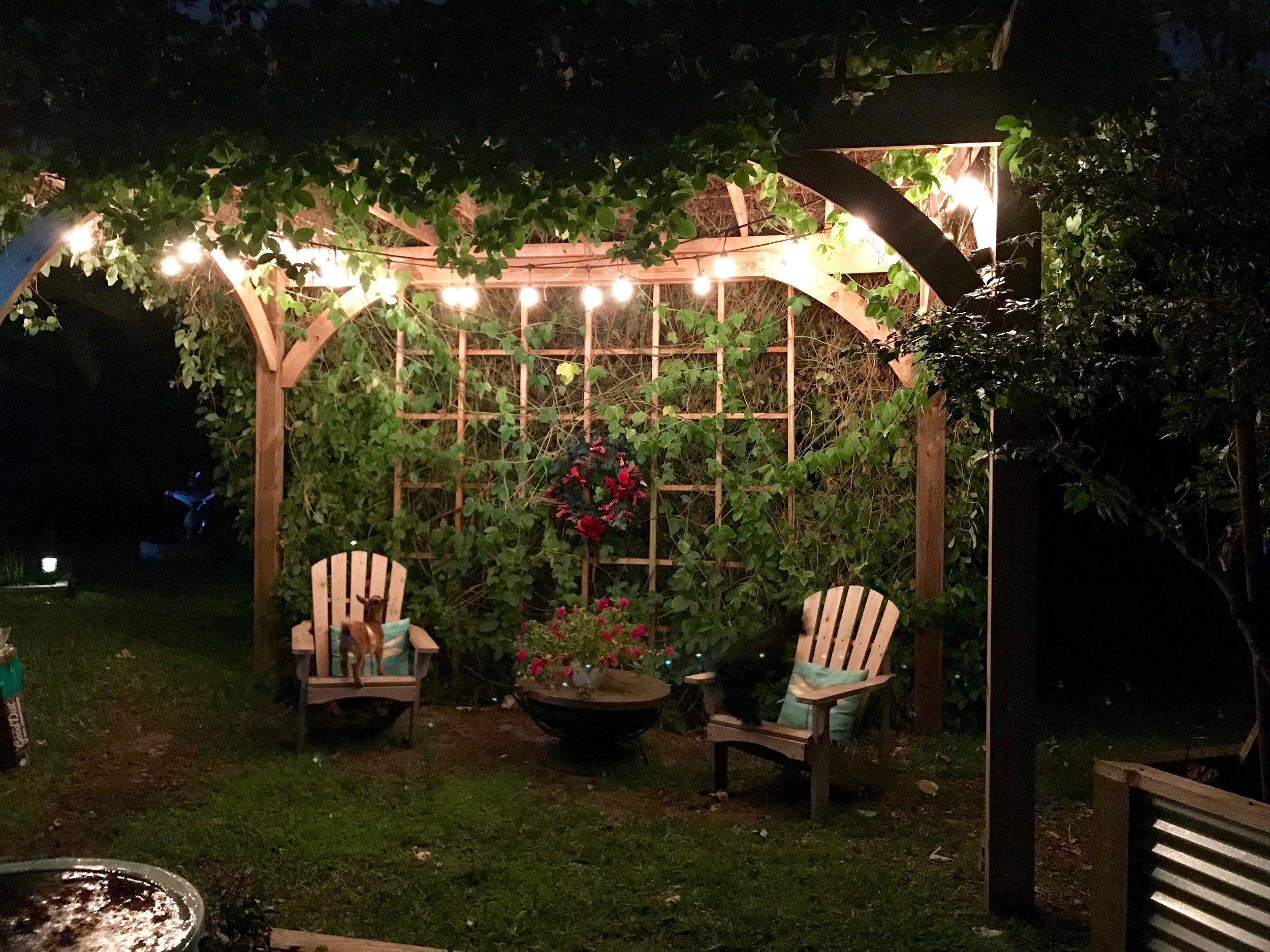 garden at night.JPG