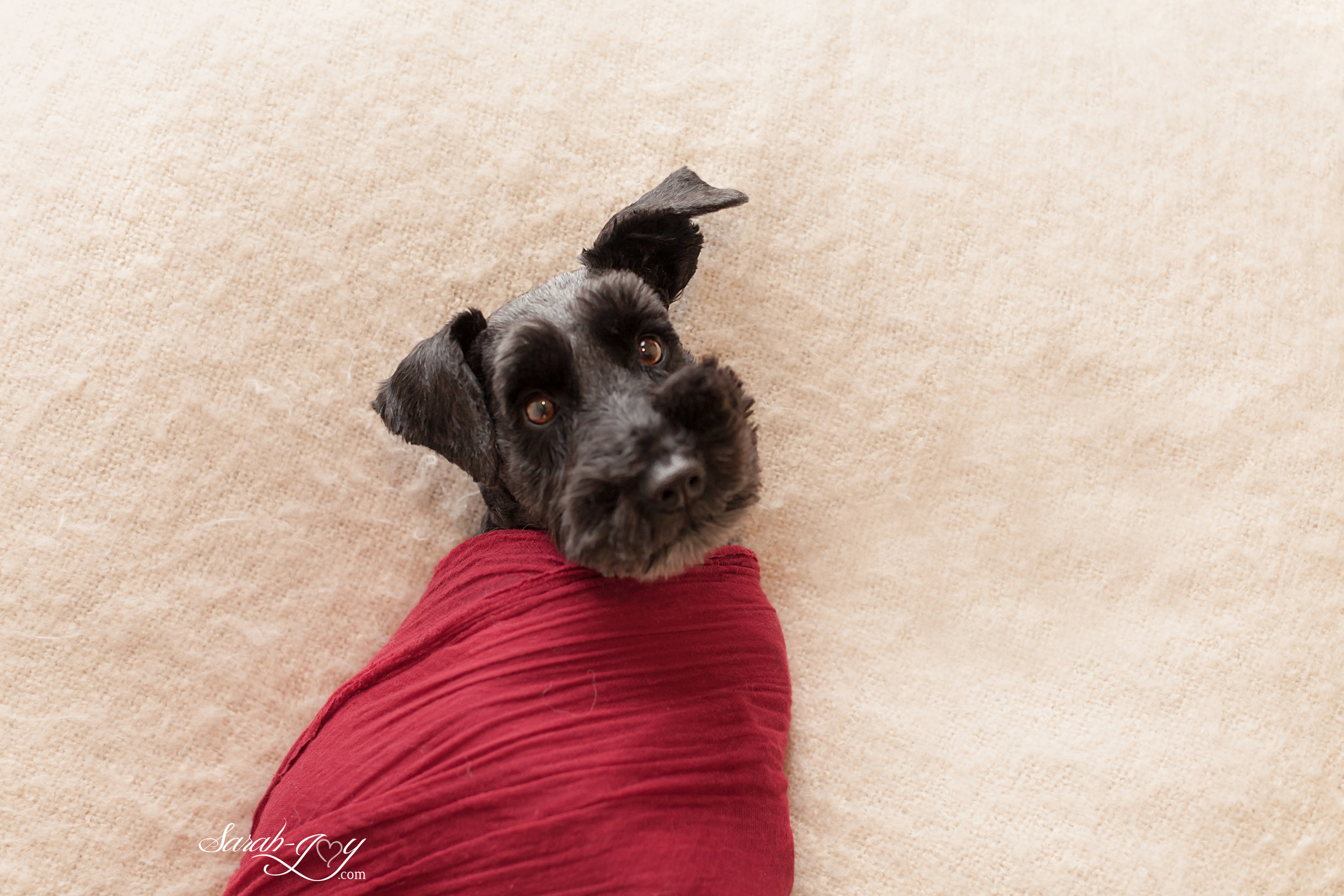 Best dog photographer in melbourne.jpg