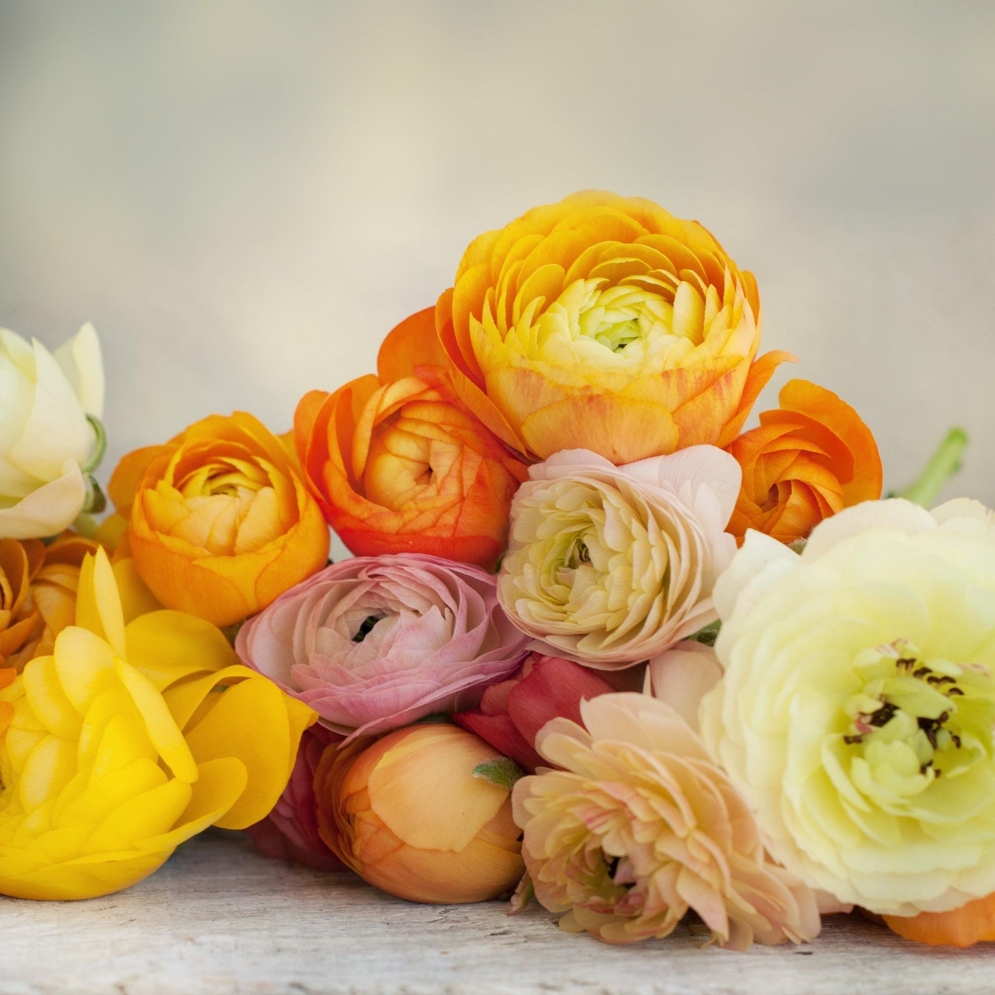 Ranunculas - Buttercup flowers.jpg