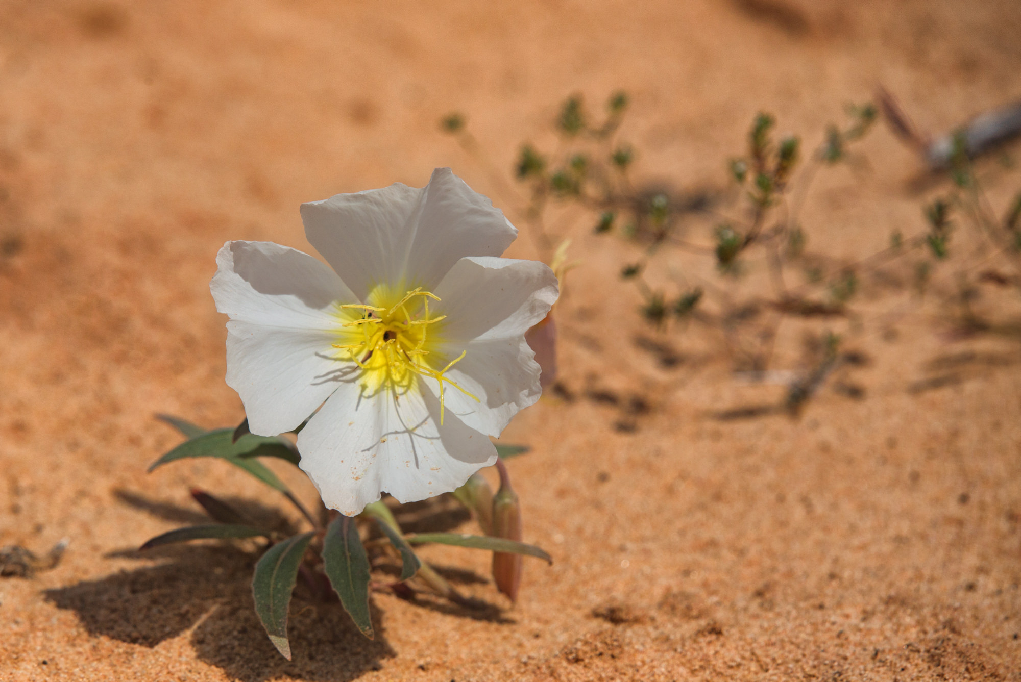 Flower from sand