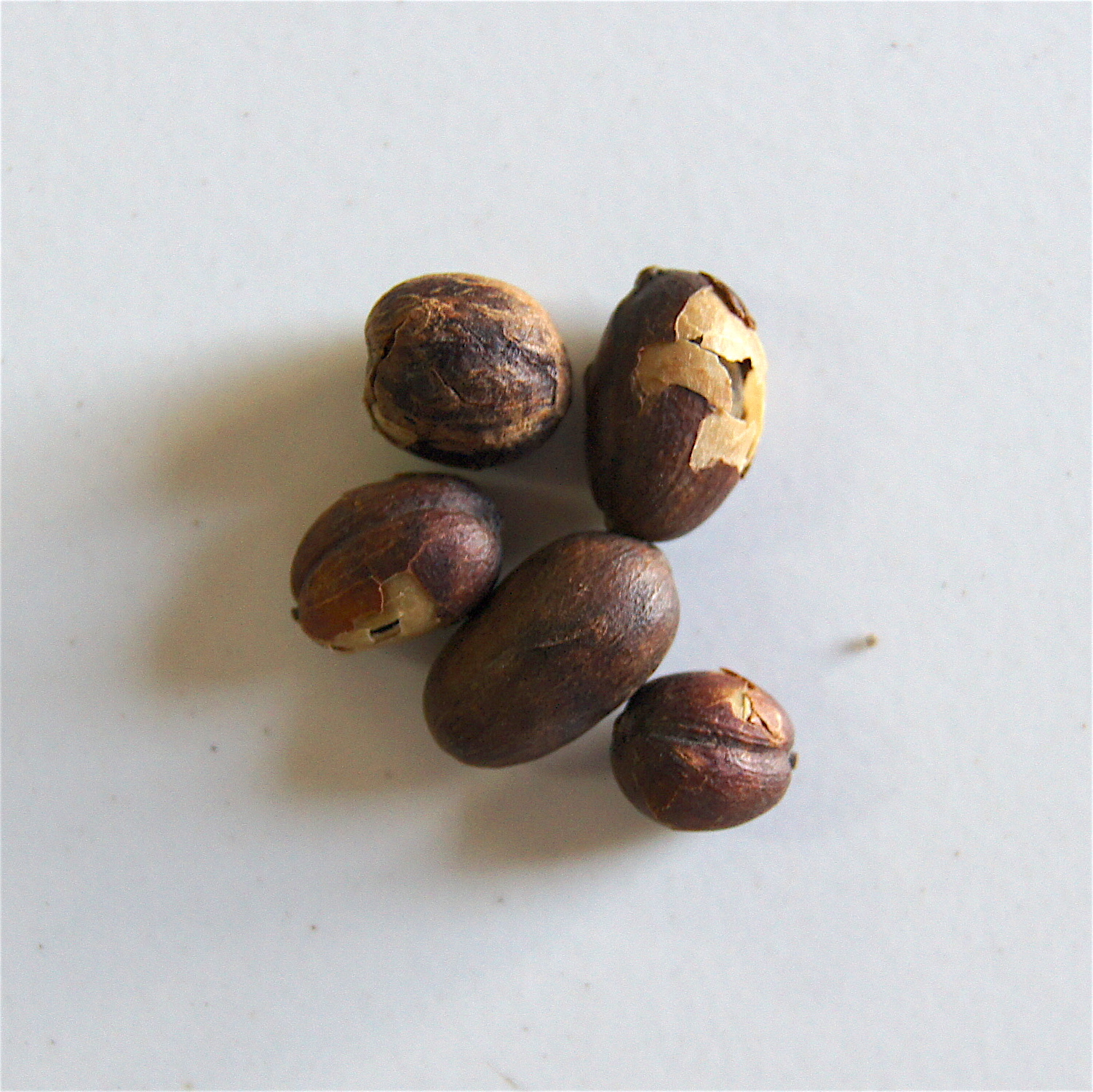 Cerises séchées sur le grain - mauvais dépulpage