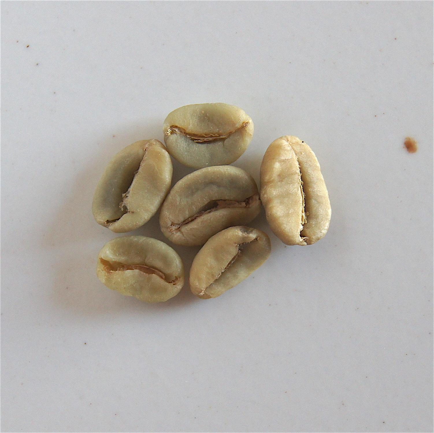 Grains jaunâtres/blanchâtres - grains mal séchés et attaqués par une bactérie durant le stockage ou le transport