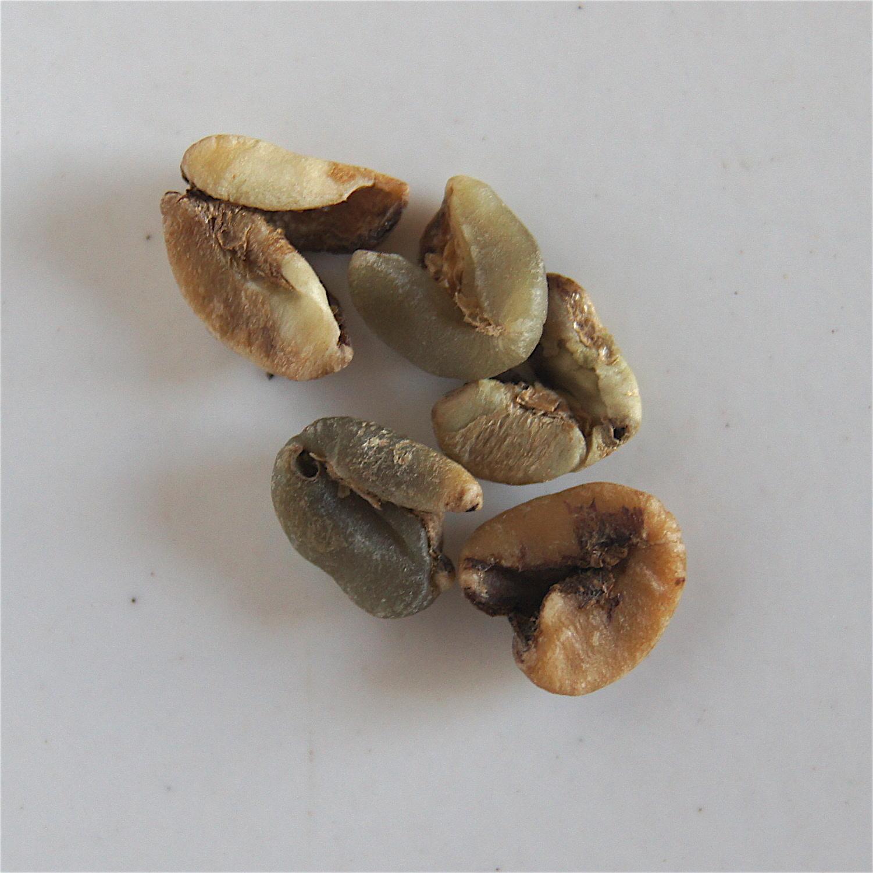 Grains écrasés - grains abîmés durant le séchage