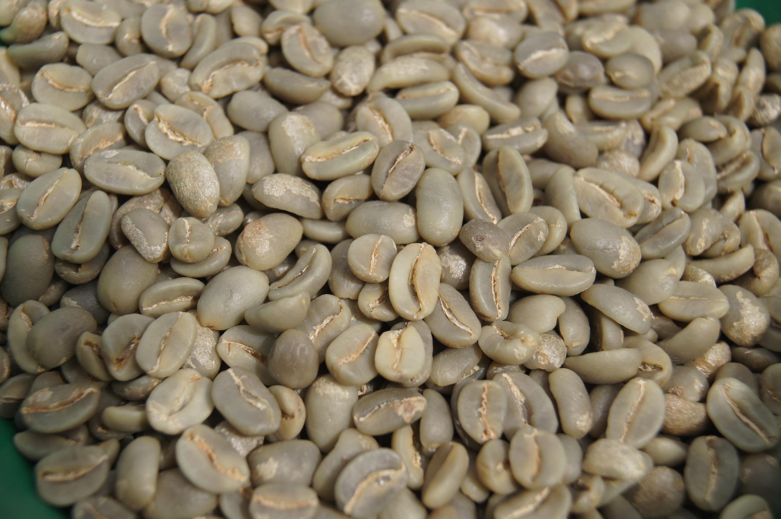 Café vert trié