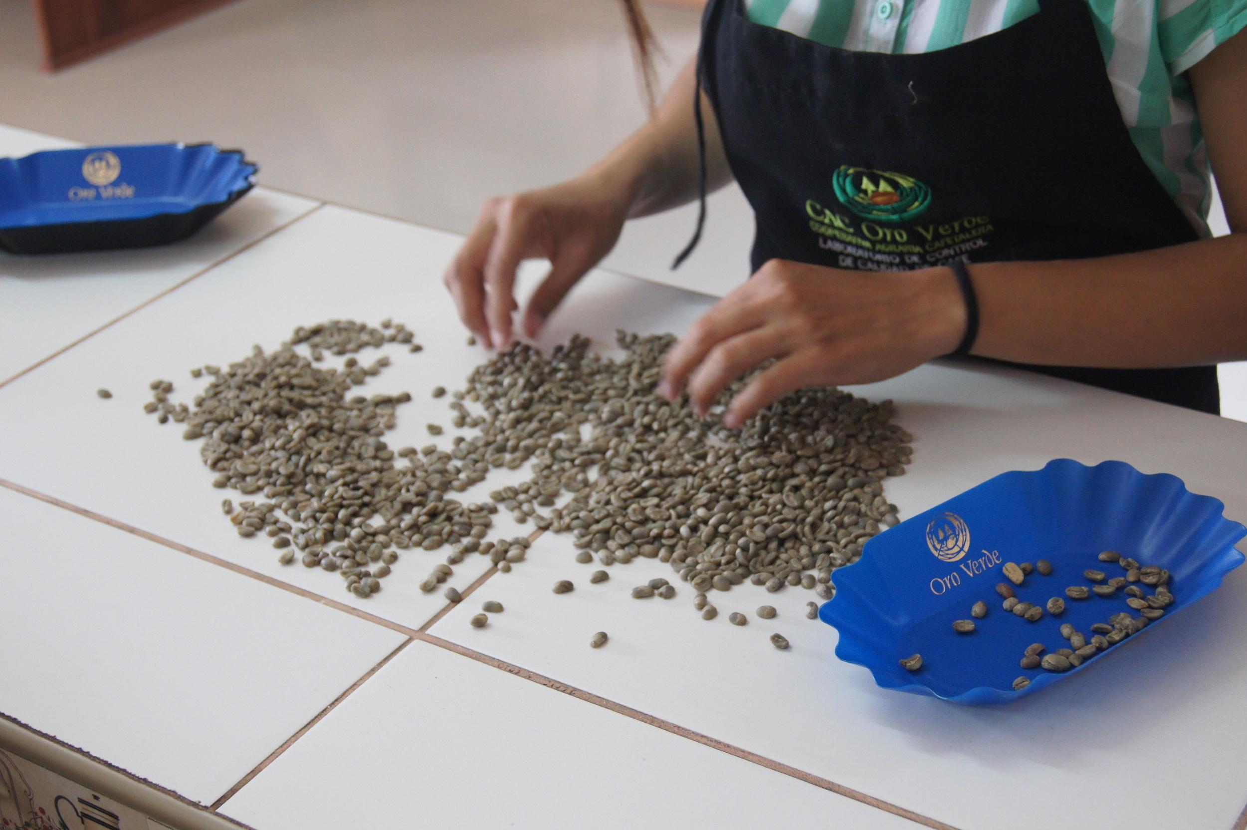 Tri des défauts du café vert