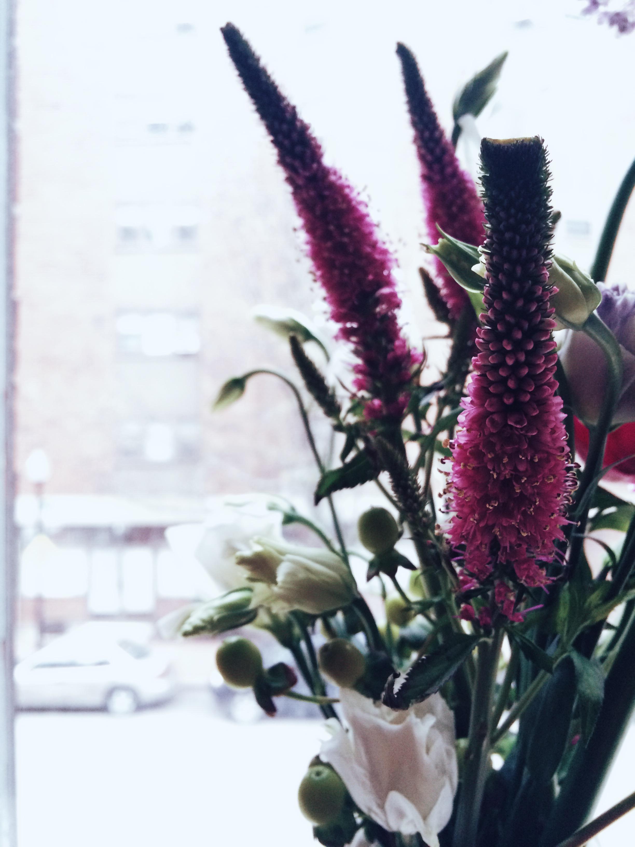 Purple Spears