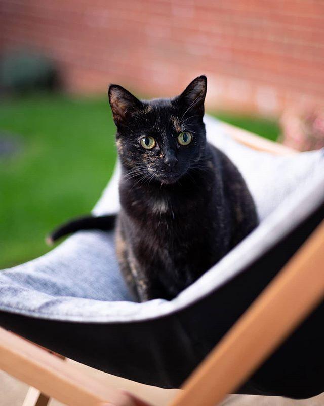 🐈 . . . #catsofinstagram #cat #tortoiseshellcat #rescuecat #summer #summerevening #canon6d #canon #photography #50mmphotography