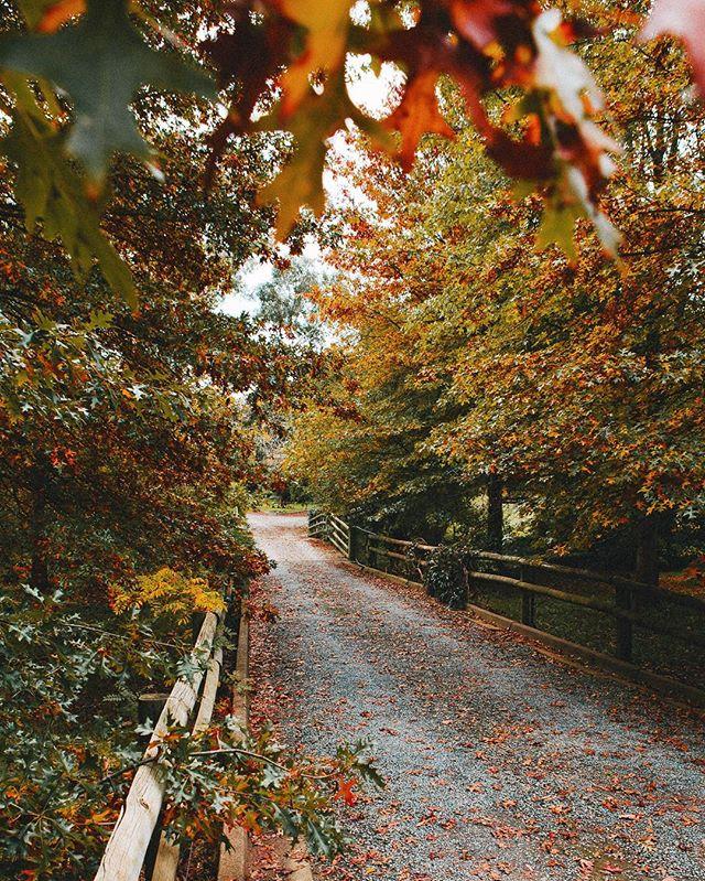 Adelaide Hills turning on the Autumn tones. #adelaidephotographer #contentcreation 📷@heyandy.studio
