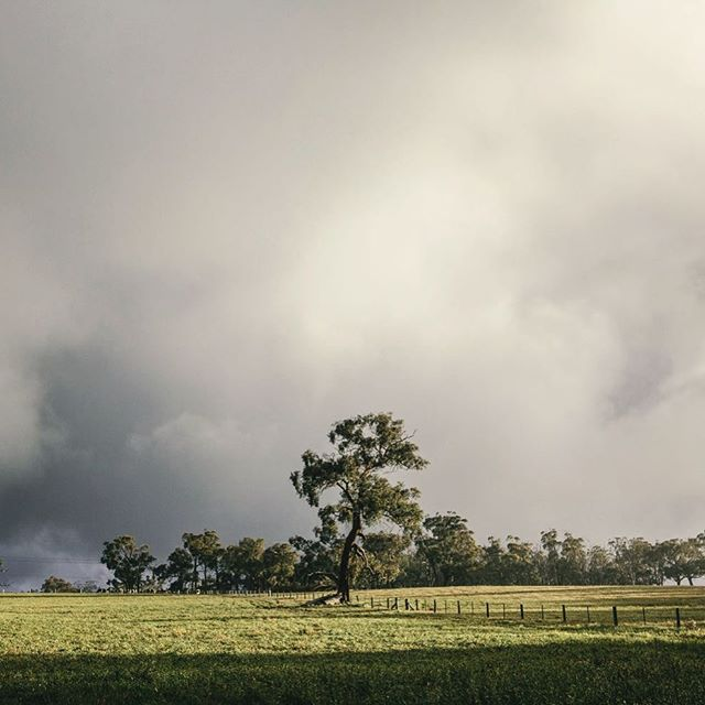 The changing seasons of Longwood, Adelaide Hills & a welcome break in the clouds. #adelaidephotographer #contentcreation 📷@heyandy.studio
