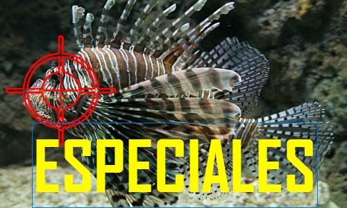 ESPECIALES.jpg