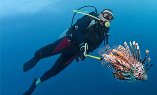 Lionfish Expedition - Certified divers are you ready for action? Join our exciting lionfish hunting dives and learn about this invasive species.