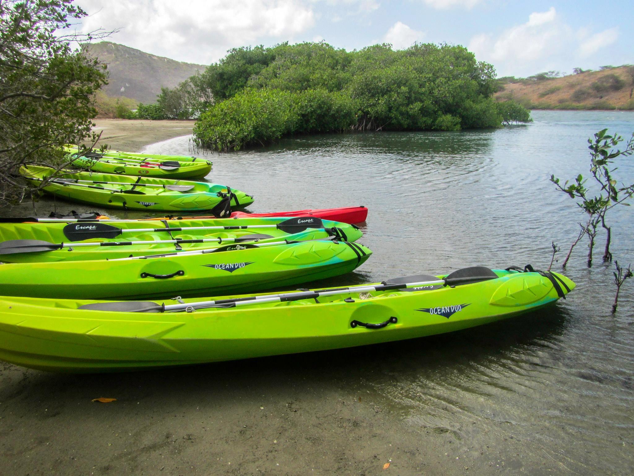 Kayak Trip - Kayakking Mangrove trip for $45.00