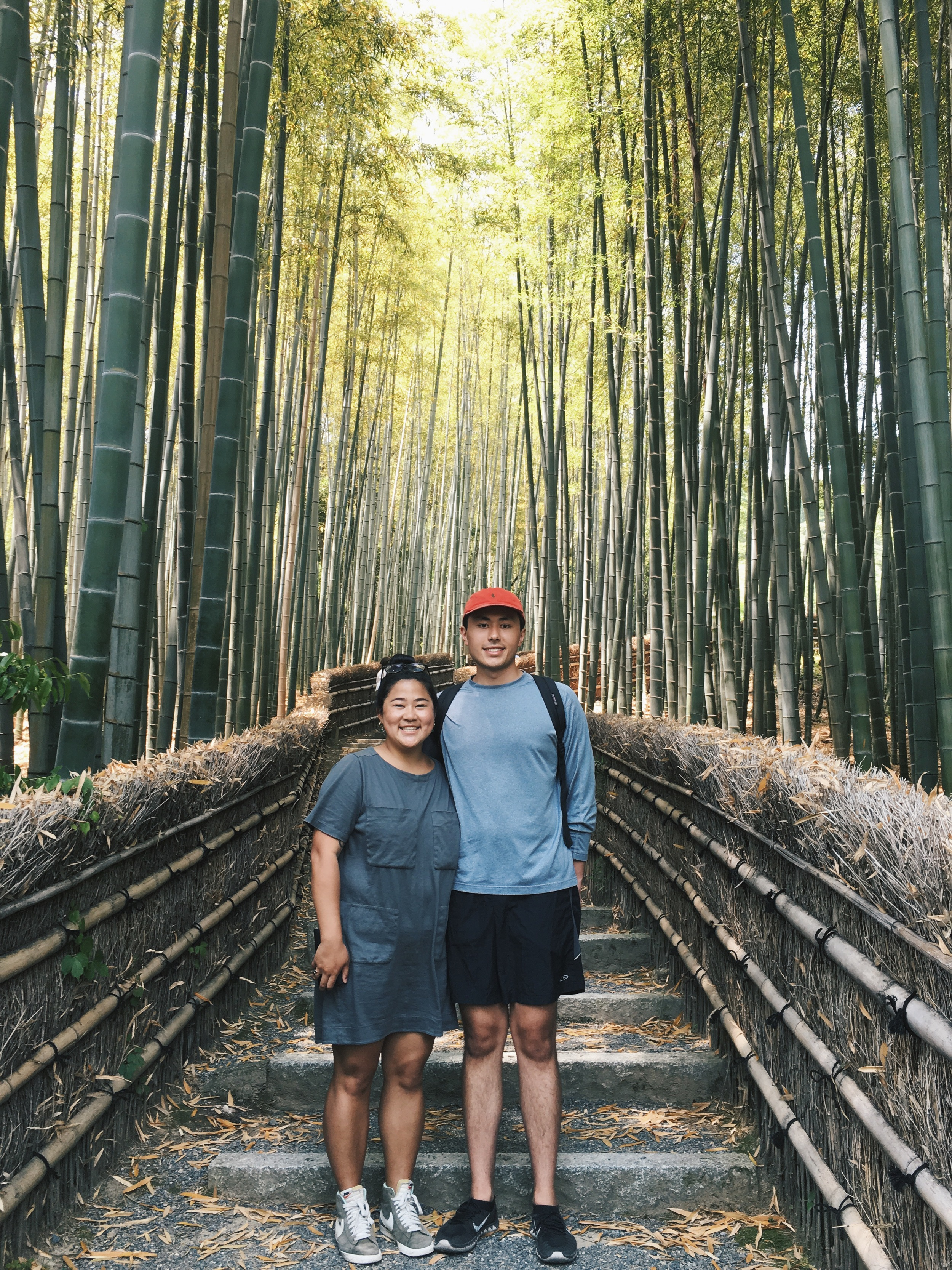 Bamboo Forest 🎍
