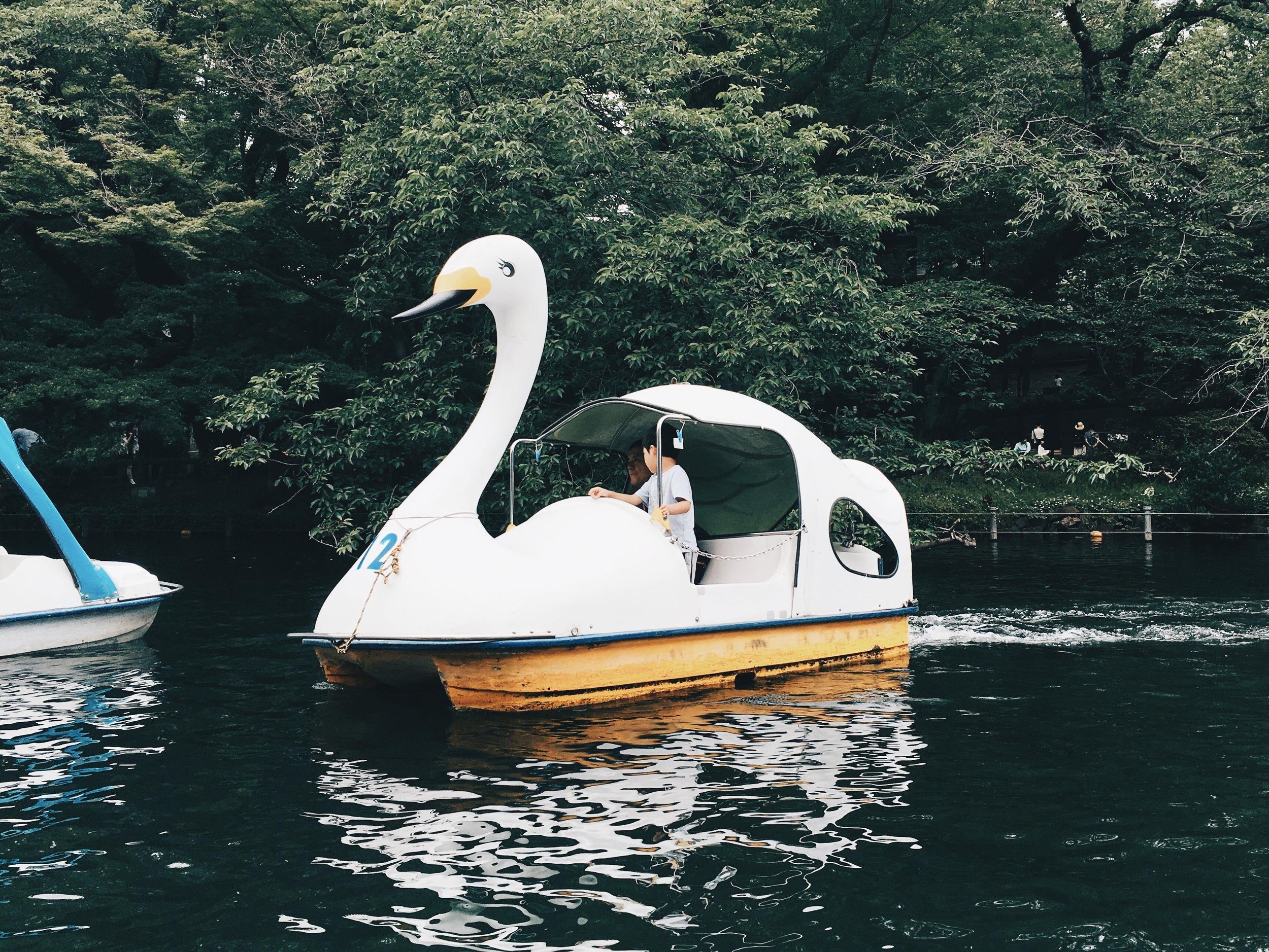 Swans in Inokashira Park