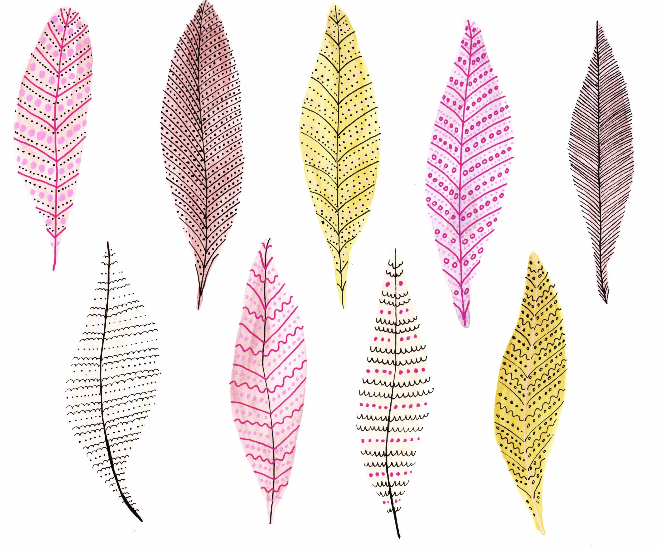feathers-first_low-res-rev.jpg