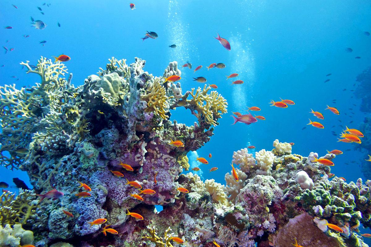 chania underwater.jpg