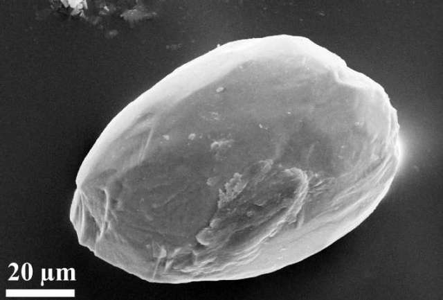 An electron microscope image of a dust particle rounded by eolian transport. It originated in the Sahara desert and was found in 7.2 million year old sediments in Greece. Photo: Ulf Linnemann, Senckenberg Center for Human Evolution and Palaeoenvironment, University of Tuebingen