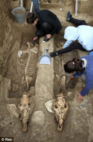 The chariot and horse skeletons are 2,500-years-old and were discovered in the village of Svestari in north-east Bulgaria.jpg