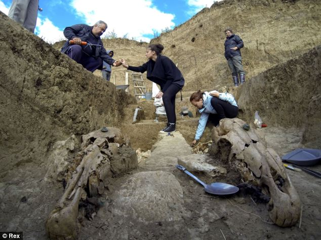 Archaeologists have uncovered the remains of a Thracian carriage and two horses that appear to have been buried upright.