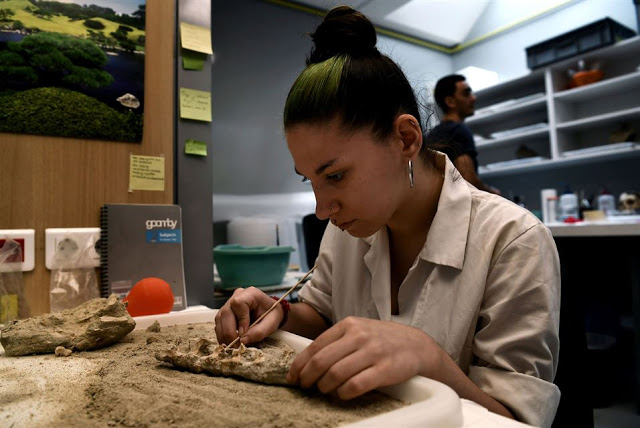A conservator of archaeological works on human bones in a lab at the American School    of Archaeology in Athens on July 7, 2017 [Credit: Aris Messinis/AFP]