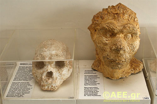 petralona-cave-skull-4_0.jpg