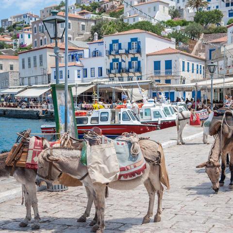 119873-hydra-greek-island-donkey.jpg