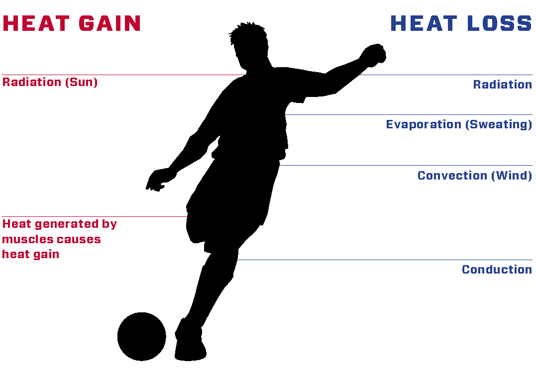 Figure 1:  During exercise you will gain heat through the heat generated by muscle and by radiation from the sun. You will lose heat mainly by wind cooling and radiation. The most important way to lose heat, though, is through evaporation of sweat from your skin.