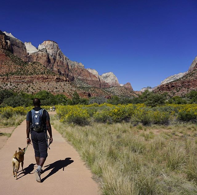 Dogs aren't allowed in most of the National Parks, but we found one dog-friendly trail at Zion and it was beautiful!