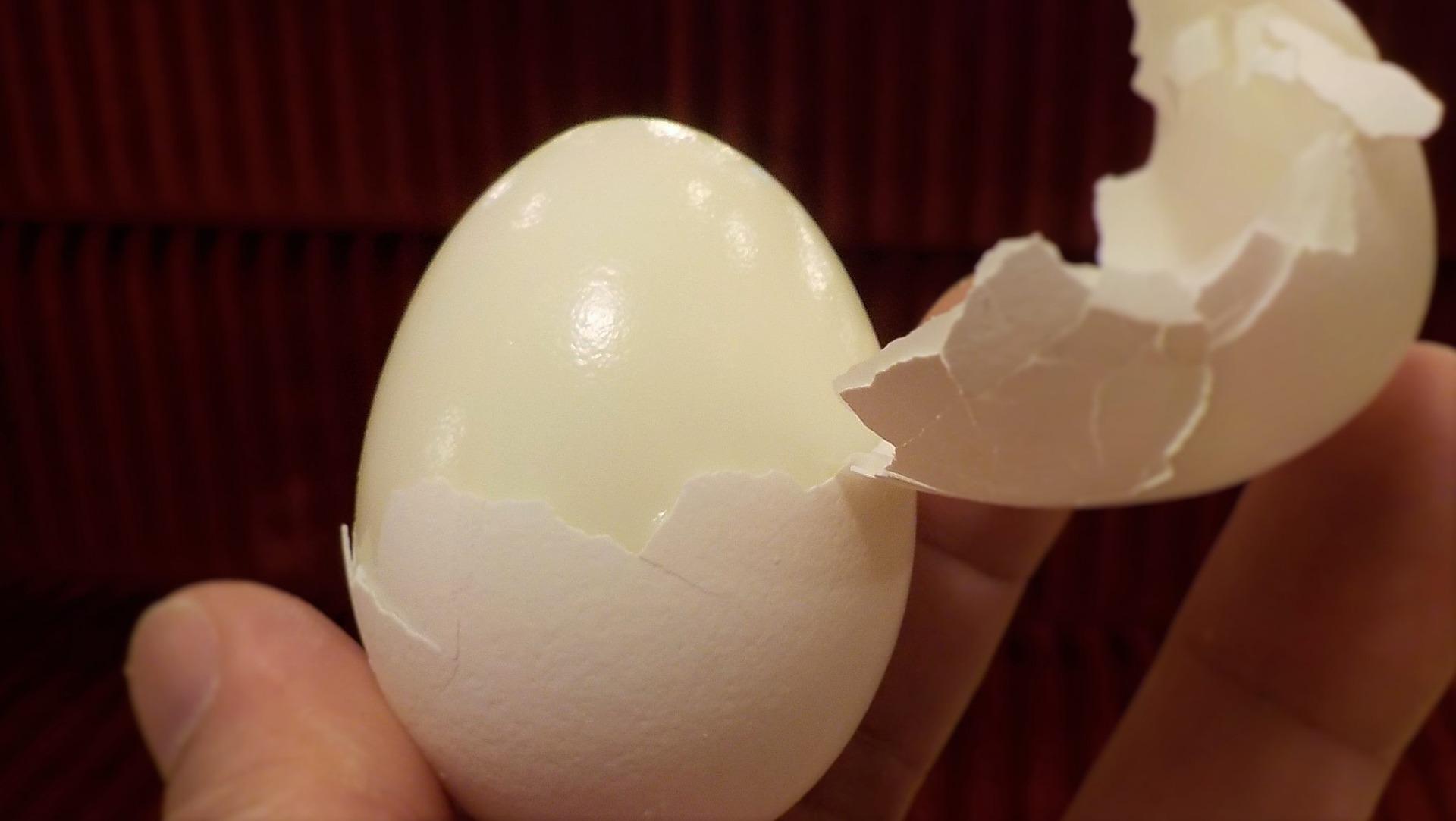 Pallia dell'uovo