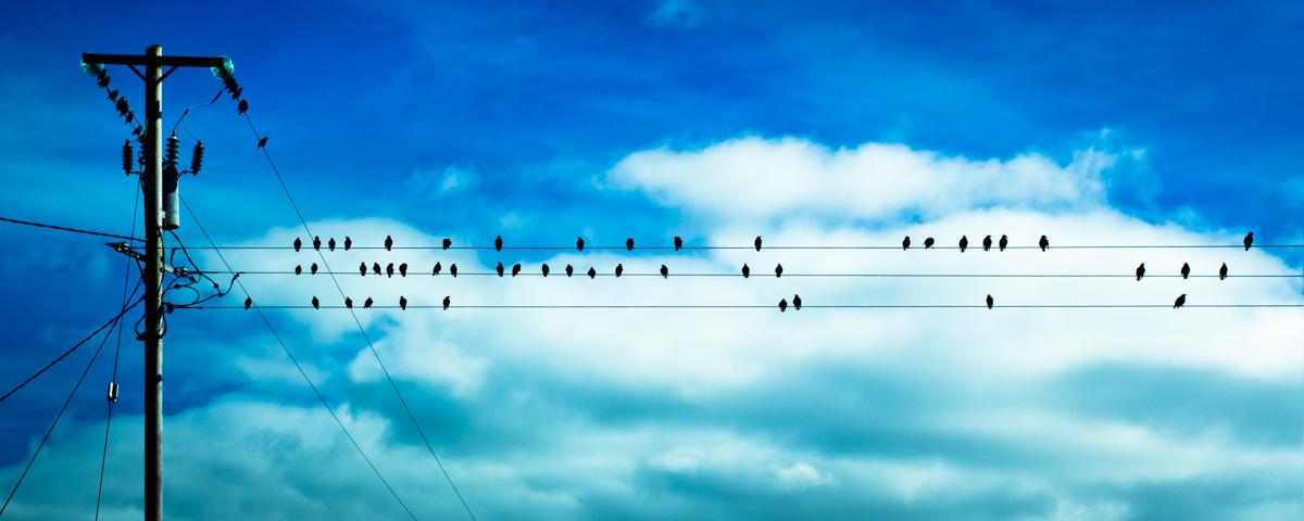 04_IMG_4576_birds_ws.jpg