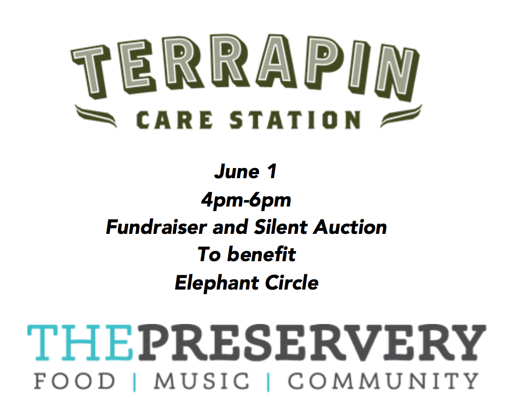 It's a Party! - Terrapin Care Station and The Preservery are teaming up for one of their Concerts for a Cause - this time to benefit Elephant Circle. Join us on June 1, 2017 from 4-6pm for food, music and community. Plus a silent auction! Stay tuned here for more information.