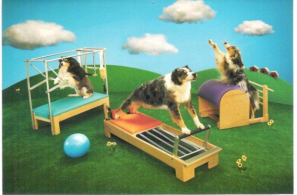 dog-equip.jpg